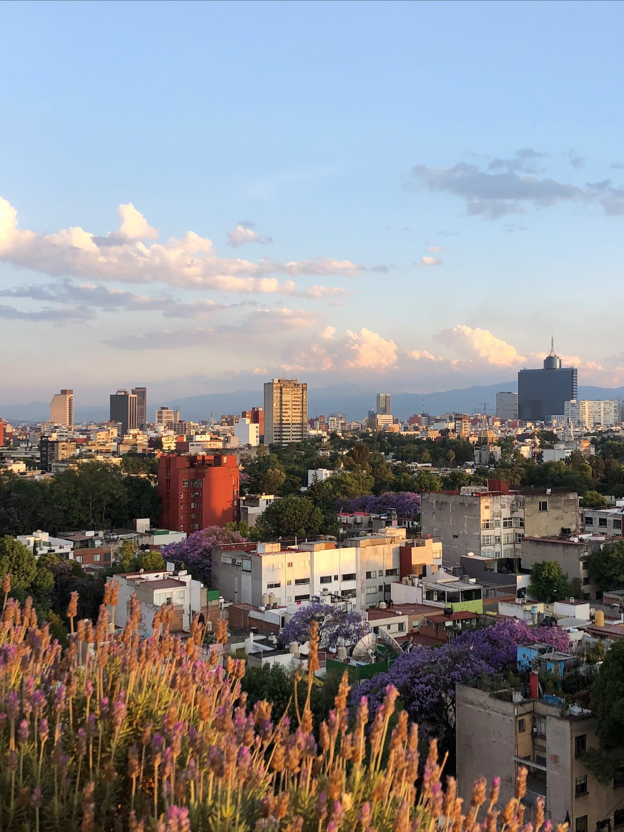 mexico city skyline during golden hour